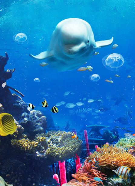 永泰欧乐堡海洋世界图片